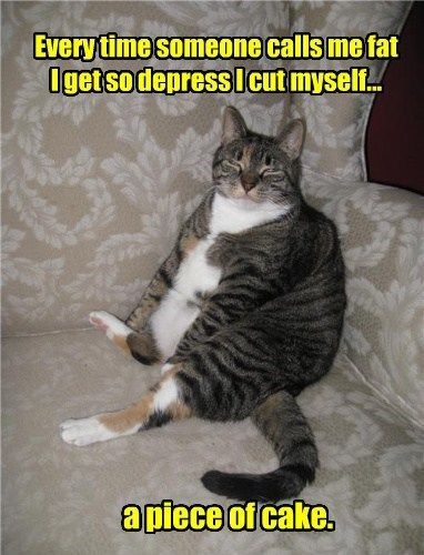 cake fat therapy Cats