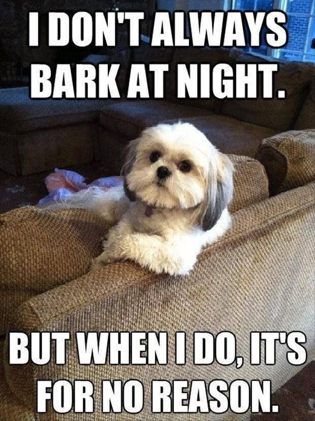 Catch the Stunning Funny Dog Pictures with Captions