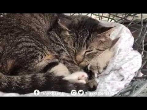 Ancient feral cat hugs tiny kitten starring Grandpa Mason and Lucy TinyKittens Cats Funny