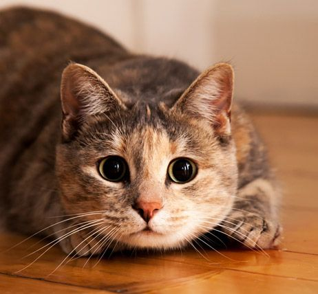 Cats also have terrific night vision — their oval shaped pupils can widen and narrow very quickly to control how much light es into their eyes
