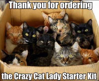 funny cat meme of a box of kittens and cats