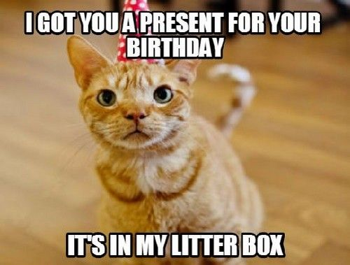 I got you a present for your birthday it s in my litter box