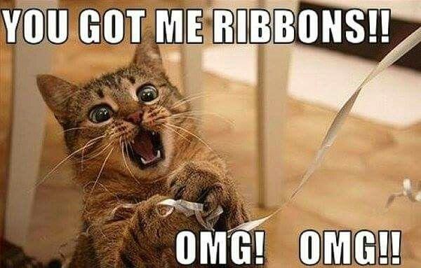 Christmas Kitty Funny Animal Memes Cat Memes Funny Dogs Animal Humor Funny