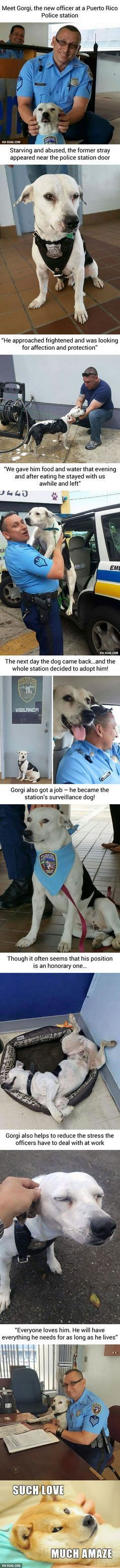 Stray Dog Walks Into Police Station Gets A Job 9GAG Dog Food Recipes