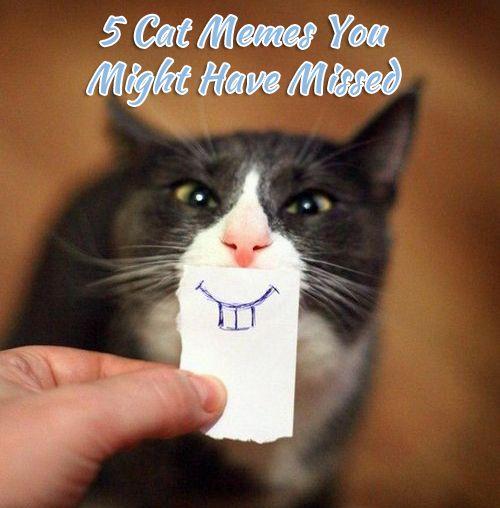5 Cat Memes