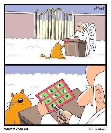 The countdown is on cat Funny cat cartoon picture