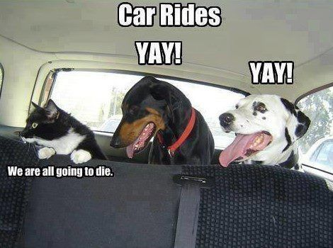 Dogs vs Cat Who Handles Car Rides Better Pet Humor Funny Humor