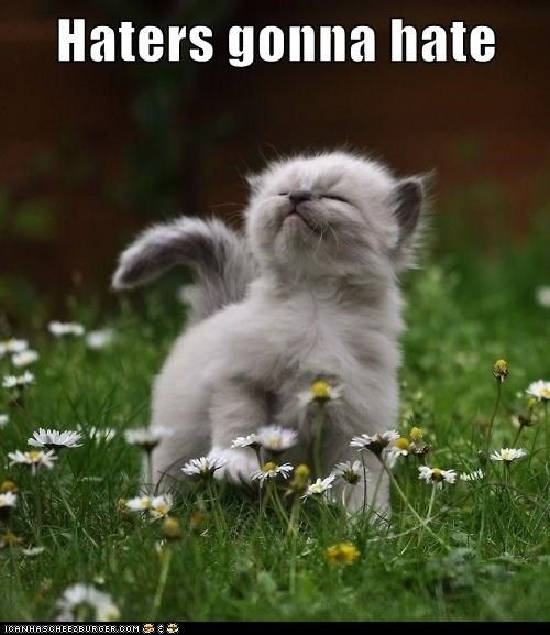 Collect the Awesome Funny Cat Memes Haters Gonna Hate