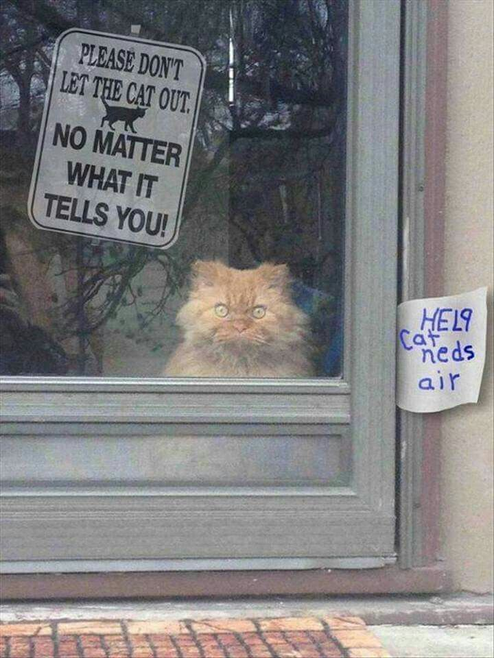 Funny Animal The Day – 28 Pics omg I just d XD