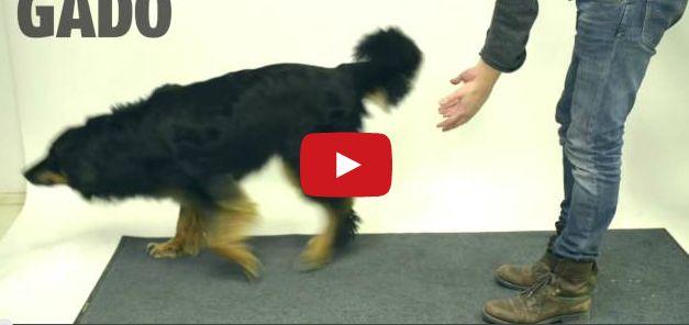 Chequea a los perros no ne les gusta esta VAINA Noticias del Momento y de forma Entretenida