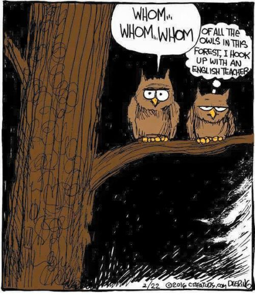 WHOM OF ALL THe OWLS IN THIS FOREST I AooK UP WITH AN ENGLISH TE