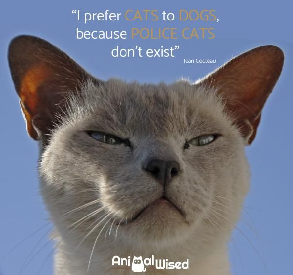 Winston Churchill Cats are good masters as long as you remember what your own place is Paul Gray