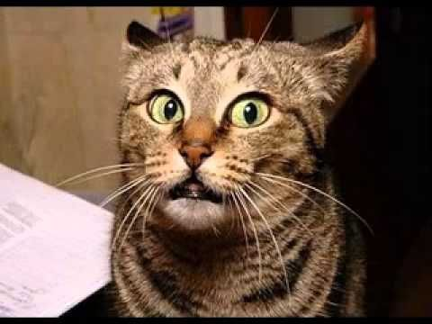 Very funny cat faces expression pictures gallery