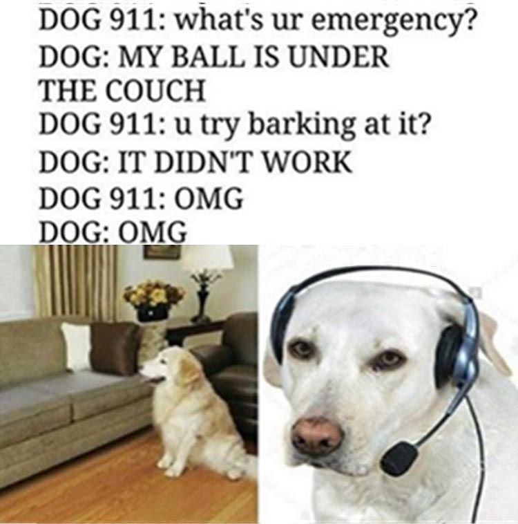 Funny Animal The Day – 24 Pics