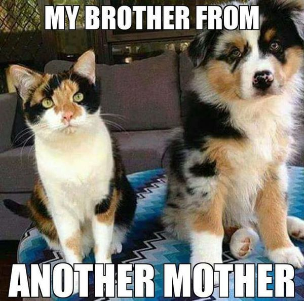 Stunning Funny Dog and Cat Memes