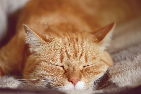 """An orange tabby cat with an """"M"""" marking on his"""