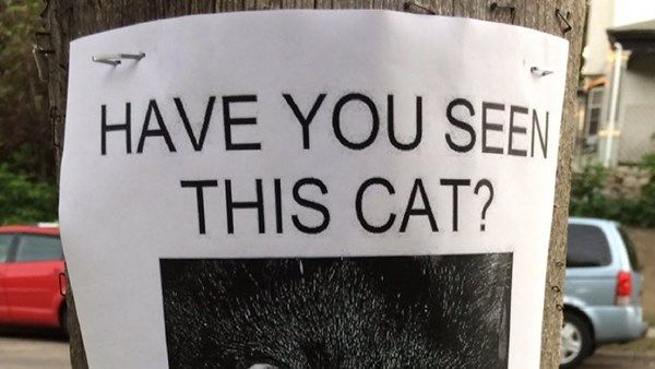 Collect the Elegant Funny Lost Cat Pictures