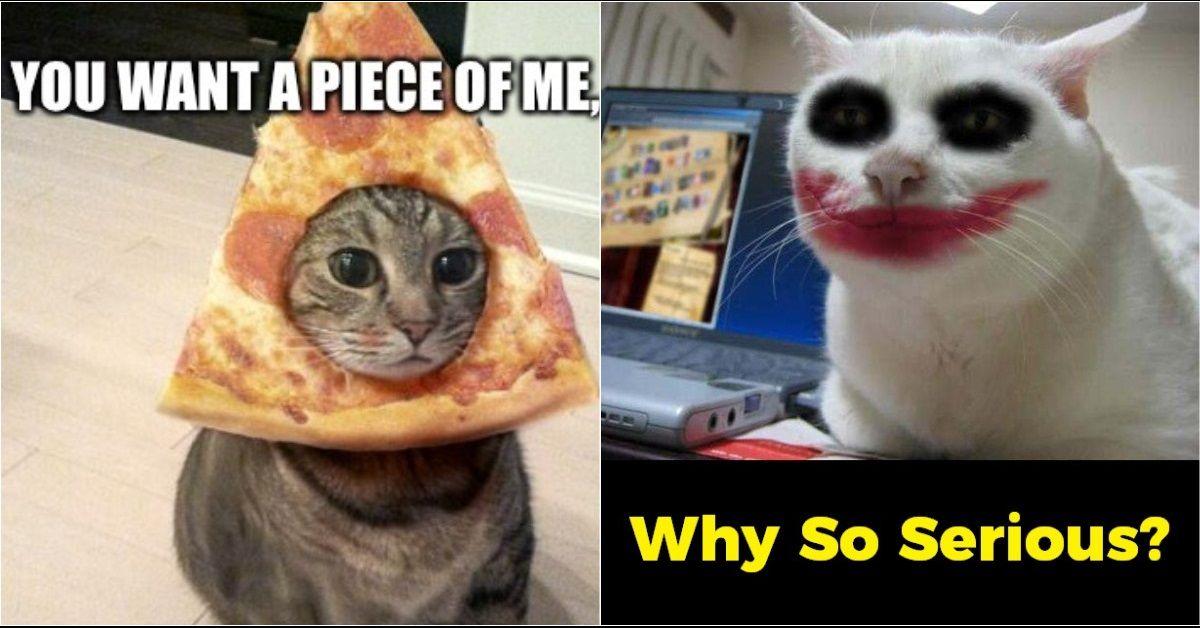 Funny Cat Memes 7