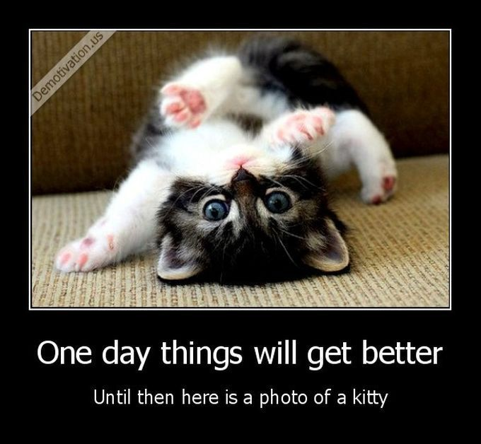 That helps thanks Little Kitty I Love Cats Cute Cats Pretty Cats