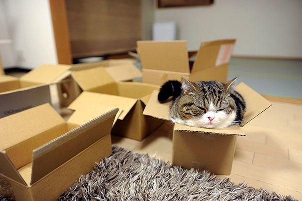 funny cats if it fits i sits 11