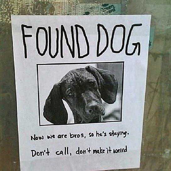 weird dog 58b8c98f3df78c353c20d875