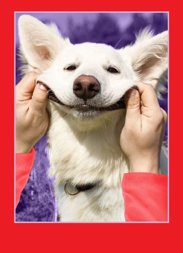 Smile Dog Valentine Funny Valentine s Day Card Say Happy Valentine s Day with this cute dog greeting