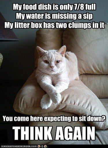 boss litter box food Cats