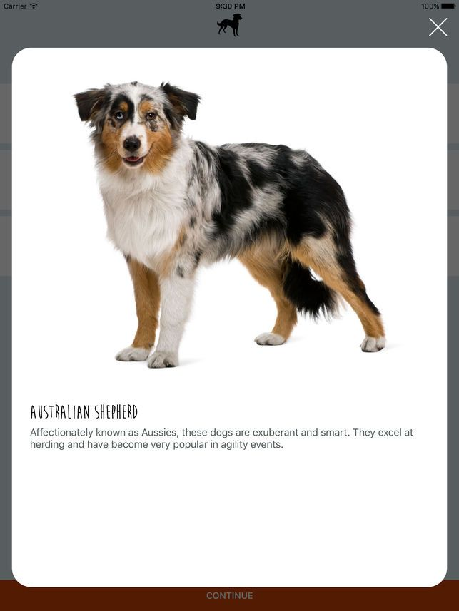 What s My Mutt on the App Store