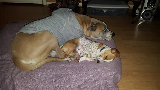 Keeping Warm Picture perfect pets