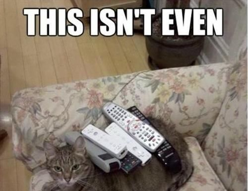 Best Funny Quotes Top 30 Funny cat Memes…