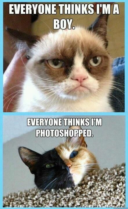 Grumpy Cat meme For more hilarious memes and memes funny visit
