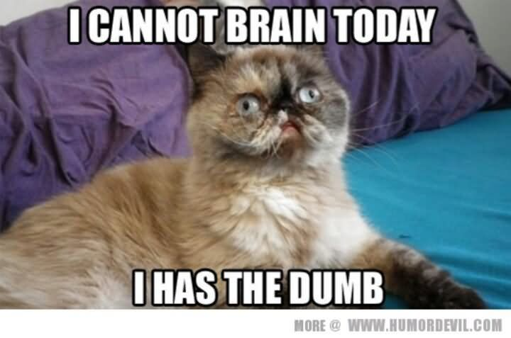 I Cannot Brain Today I Has The Dumb Funny Cat Meme Image