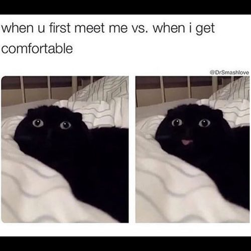 Funny Memes When you first meet me vs when I fortable