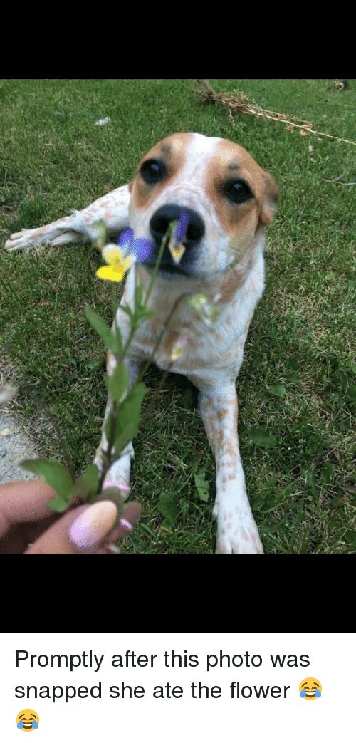 promptly after this photo was snapped she ate the flower