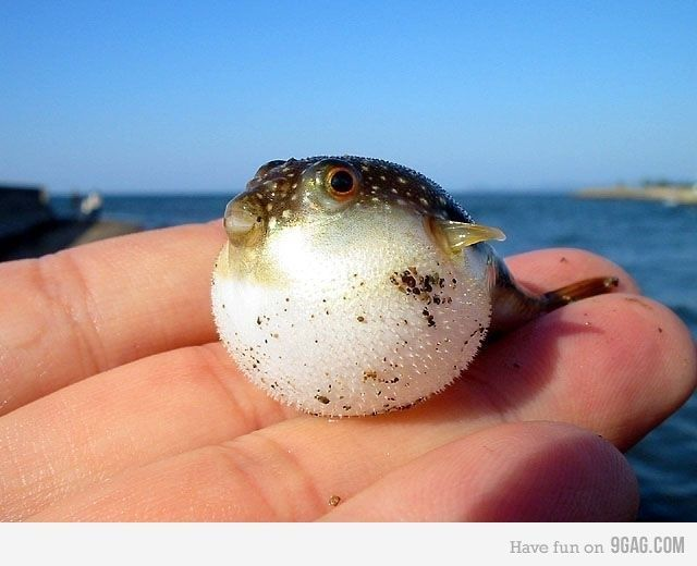 Collect the Luxury Fish and Animal Pictures Funny