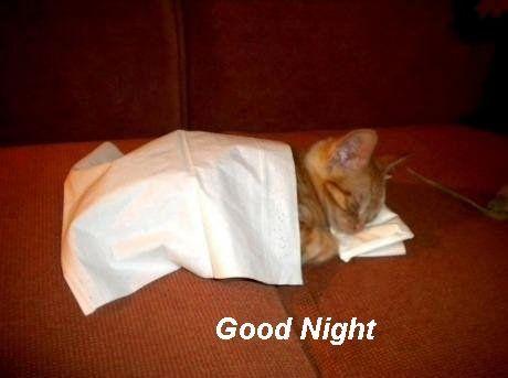 Inspirational Saying Good Morning Funny Cat Good Night