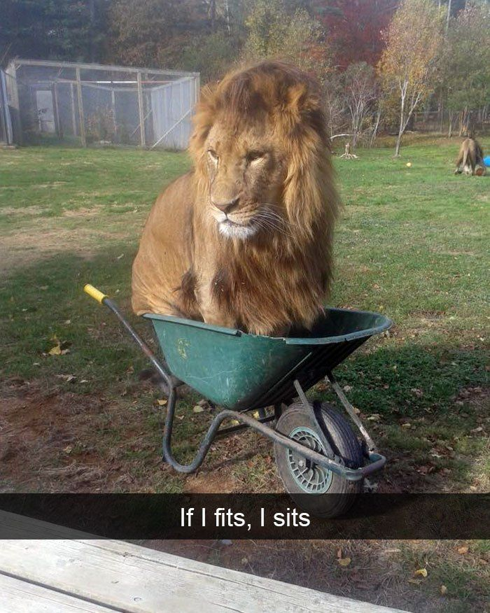 Who s going to tell him any different Funny Animal ics Cute Funny Animals