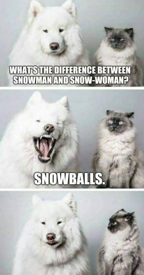 The cats face in the second photo 😂👌 Funny Animal Memes Funny Dogs