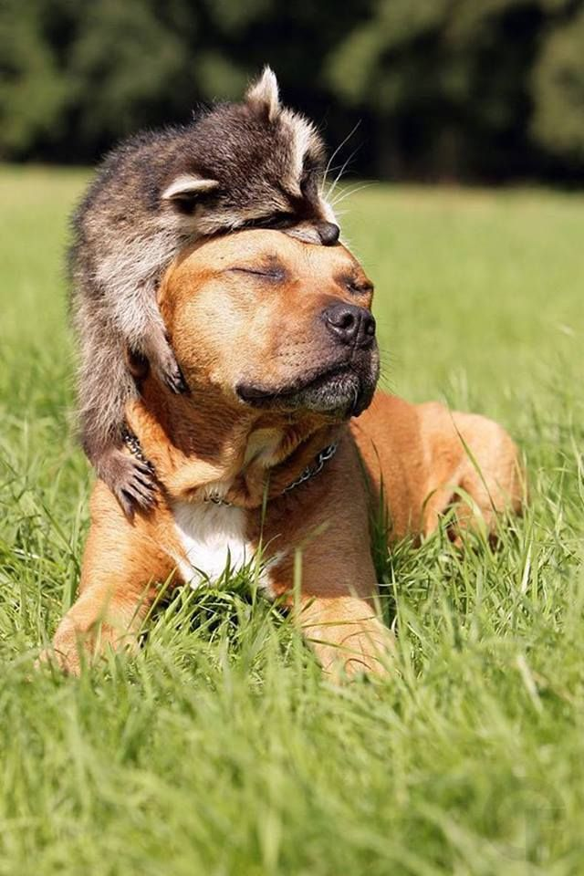 """I love you murder dog "" ""I love you too trash panda """