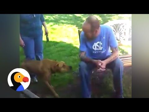 Dog Doesn t Recognize Owner After Weight Loss Until He Sniffs