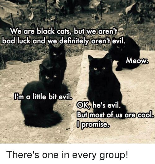 Memes Bad Luck and 🤖 we are black cats but we aren