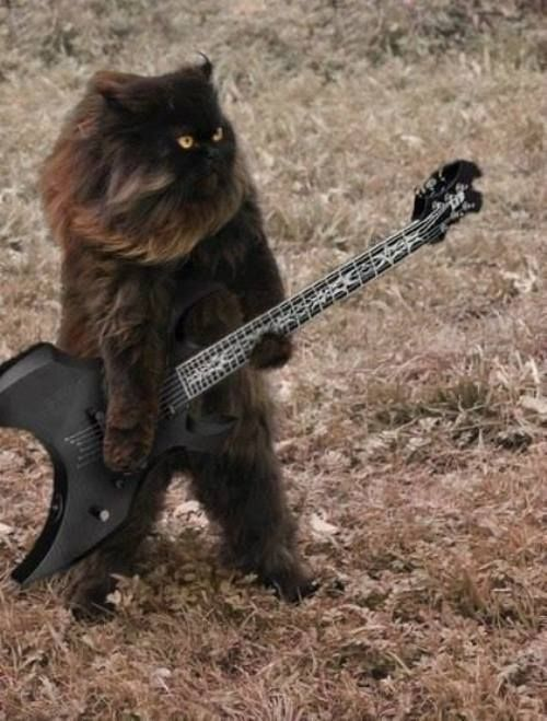 It s ewok cat with a guitar Via the Berry