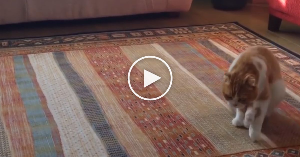Funny Cat Has A New Way of Moving Around The House It s Hilarious… LOL Just Watch