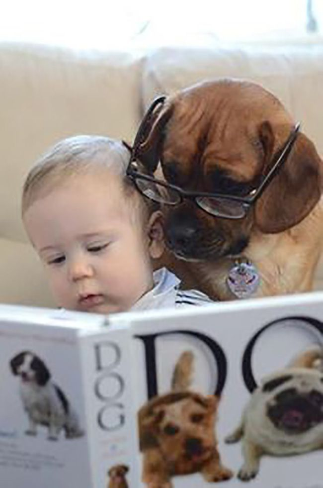 As a rambunctious kid a huge part of my family was our lovable dogs We Read More