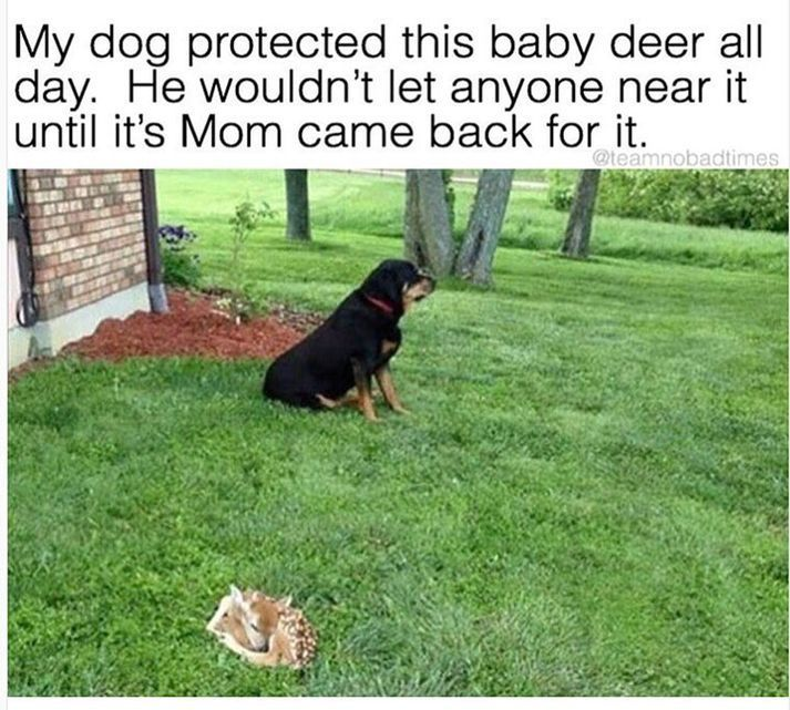 50 Animal Memes – Funnyfoto
