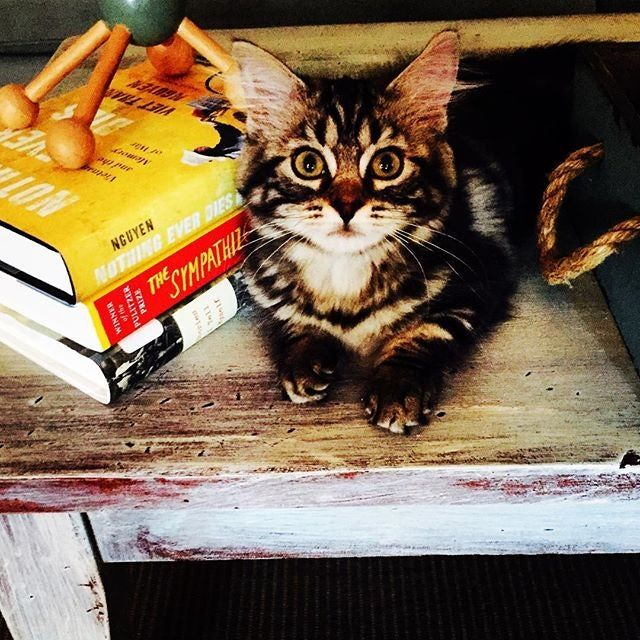 """7This """"cat alouge"""" has the cutest kittens"""