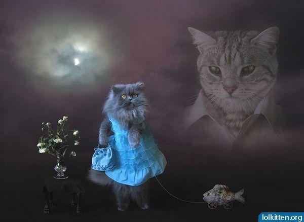 Strange cat portrait