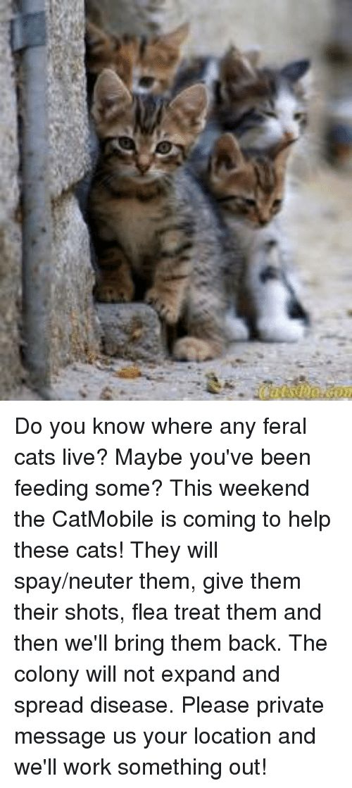 Cats Memes and Work Do you know where any feral cats live