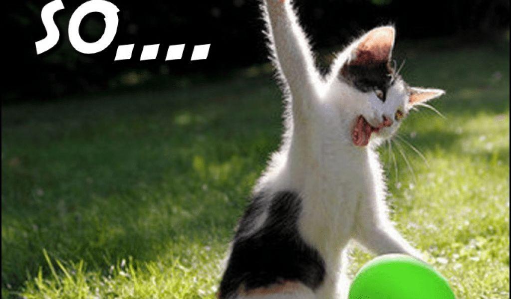 Sister 50 Birthday Card Elegant 50 Funny Happy Birthday Cat Memes
