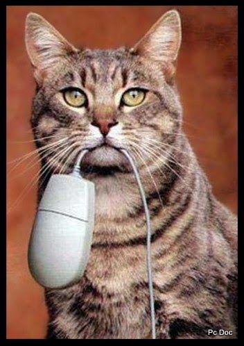 Cat vs puter mouse Funny Cool Funny